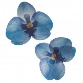 siniset orkideat